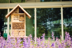 Insect hotel or house in a city environment